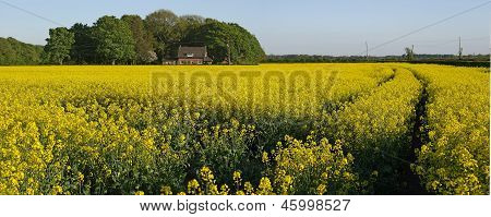 House in sea of oilseed rape