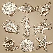 stock photo of shell-fishes  - Sea collection - JPG