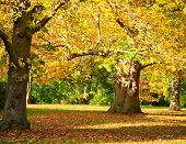 picture of royal botanic gardens  - Autumn trees in the Royal Botanic Gardens in London - JPG