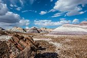 foto of petrified  - Petrified wood amidst towering hills with colorful bands of silt - JPG
