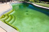 stock photo of algae  - Back yard swimming pool behind modern single family home at pool opening with green stagnant algae filled water before cleaning - JPG