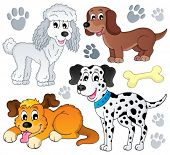 stock photo of dog footprint  - Image with dog topic 3  - JPG