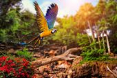 stock photo of jungle flowers  - Beautiful Ara parrot on tropical forest background - JPG