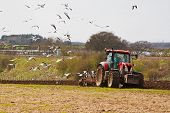 pic of plowed field  - farming scene of a farmer ploughing a field ready for new crops in spring with sea birds feeding on the exposed worms - JPG