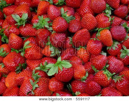 Fresh market strawberries
