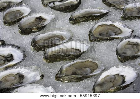 Oysters on ice, Wellfleet MA