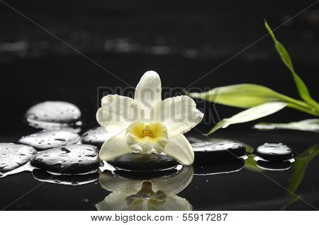 White orchid with black stones ,leaf reflection