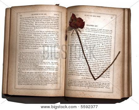 Dried Rose Antique Book