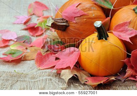 Pumpkin And Foliage Maple Leaves