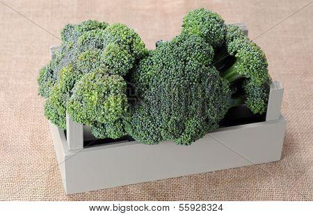 Organic Broccoli