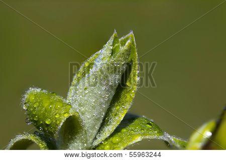 Frühjahr grüne Knospen