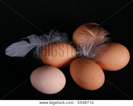 Five Healthy Eggs