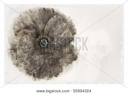 Beautiful Worn Grunge Flower