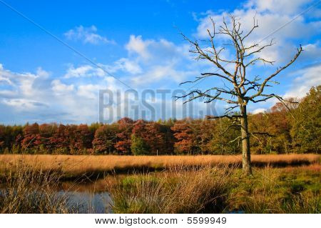 Colorful Autumn Leaves On Trees With Dead Tree In Front