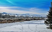 pic of dog tracks  - Snowy dog tracks in Central Wyoming - JPG