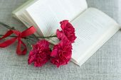 image of carnations  - Carnation - JPG