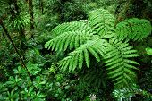 image of fern  - Photo of fern tree in cloud forest - JPG