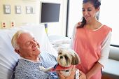 foto of geriatric  - Pet Therapy Dog Visiting Senior Male Patient In Hospital - JPG