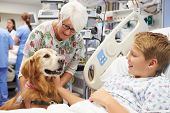 stock photo of scrubs  - Therapy Dog Visiting Young Male Patient In Hospital - JPG