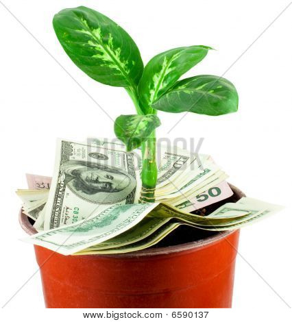Young Plant Over Banknotes