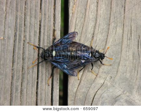 Bugs Mating