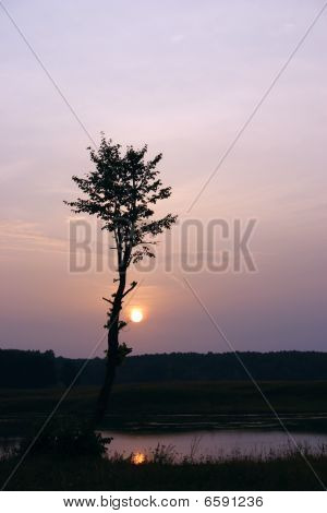 Silhouette Of A Tree Against The Coming Sun