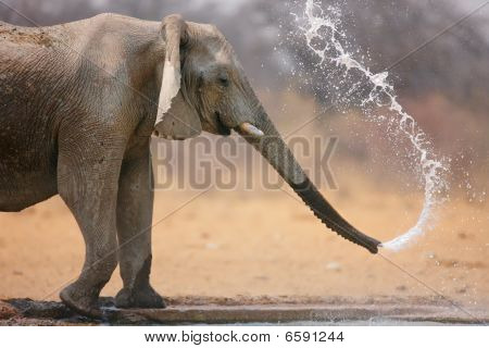 Elephant Throwing Water