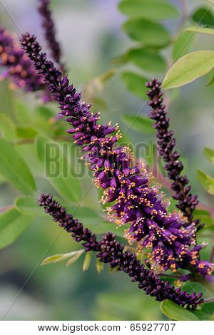 Fresh Flower Closeup on the bush