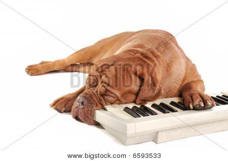 Maestro schlafen