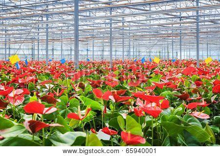 Greenhouse Flower Plant
