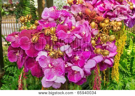 Vanda Orchid and Painted Jacaranda seeds