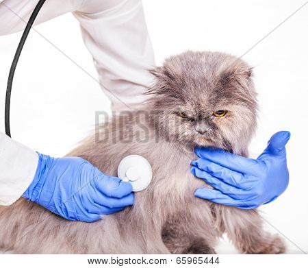 Work With Animals In A Veterinarian Clinic