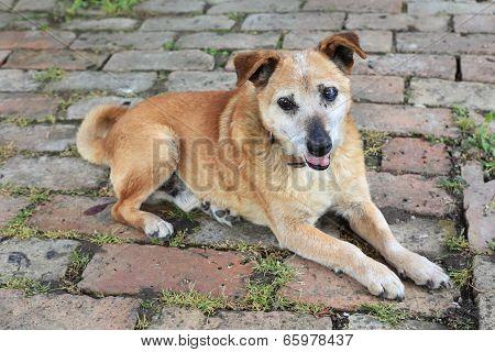 Old Sad Mix Breed Dog