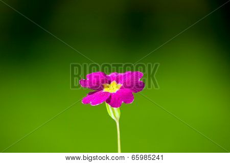 Pink Flower On Green Nature Background