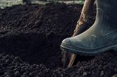 image of shovel  - Unrecognizable man digs a hole by shovel in garden - JPG