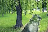 stock photo of willow  - green summer park with flowing spring and big willow tree on foreground - JPG