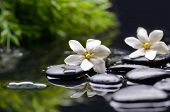 stock photo of gardenia  - Spa still with gardenia flower and green plant on pebbles - JPG