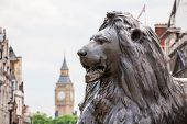 picture of metal sculpture  - Bronze lion sculpture in Trafalgar Square with Big Ben in the background - JPG
