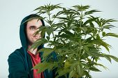 pic of hoodie  - Happy man in hoodie and cannabis plant - JPG