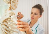 picture of skeleton  - Closeup on medical doctor woman teaching anatomy using human skeleton model - JPG