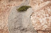stock photo of costa blanca  - Yellow flowers growing in concrete on earthy red limestone rock La Zenia Costa Blanca Spain