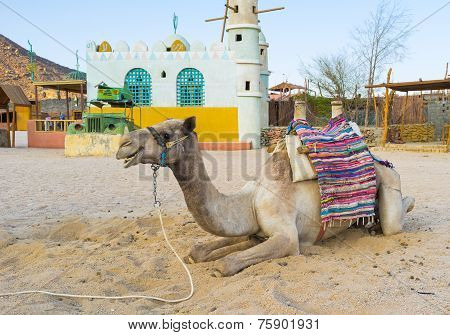 The inhabitant of the desert
