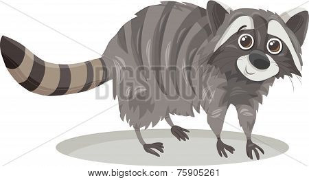 Raccoon Animal Cartoon Illustration