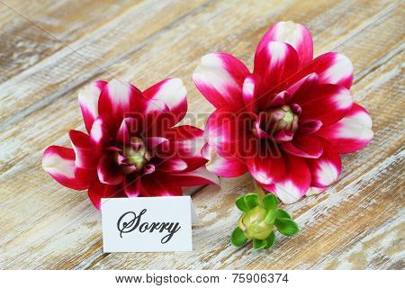 Sorry card with dahlia flowers on wooden surface