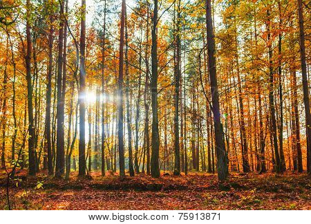 Autumn Depths Forest Trees Colorful Leaves