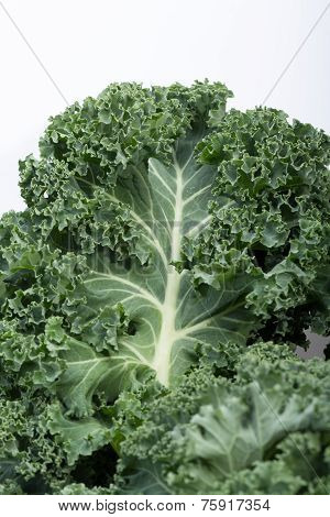 Close up of A healthy fresh curly kale