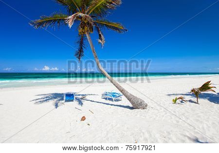 Coconut palm at perfect Caribbean beach in Tulum Mexico