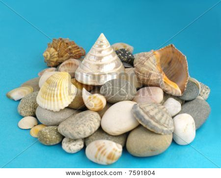 Sea shells And Stones
