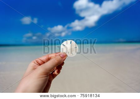 Woman hands holding sand dollar at tropical beach