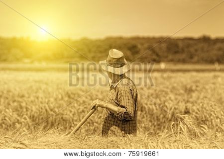 Senior Man In Field